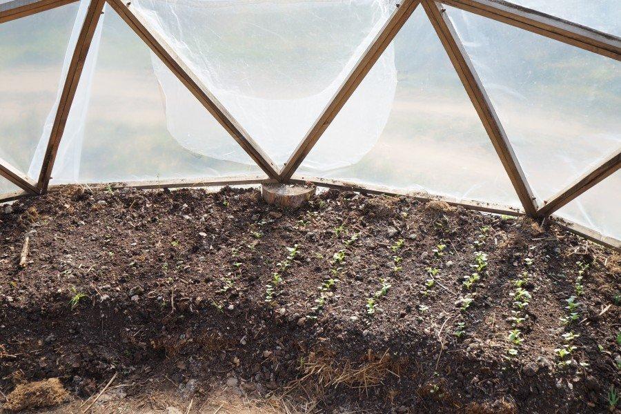 igor-greenhouse.jpg