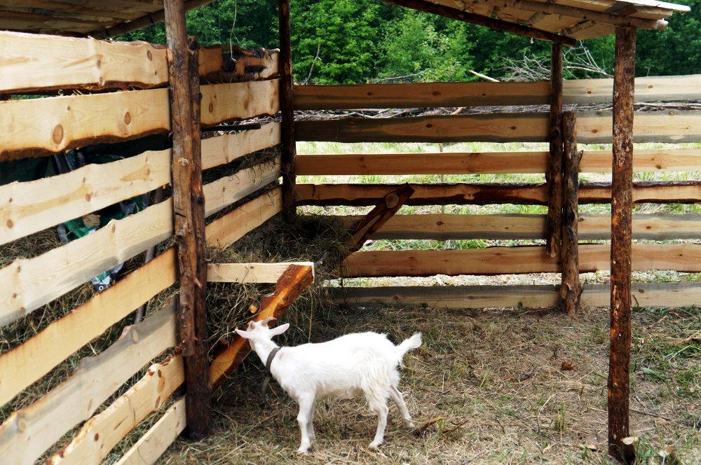 Как построить козлятник